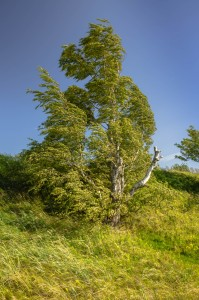 tree-in-high-winds